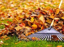 ce sa faci cu frunzele moarte