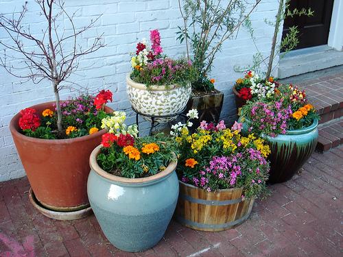 ghiveci flori 5