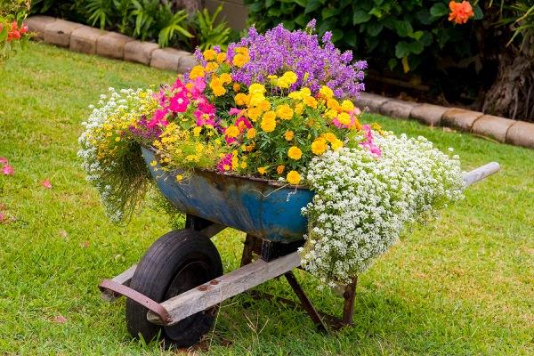 roaba cu flori 1