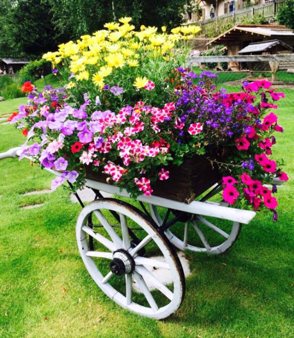 roaba cu flori 2
