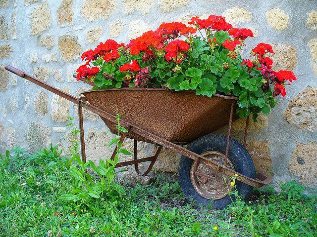 roaba cu flori 4